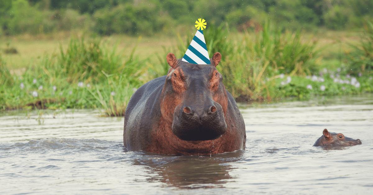 hippo met feesthoedje